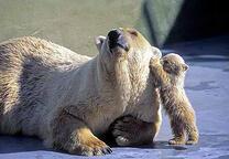 Les ours dans les productions cinématographiques