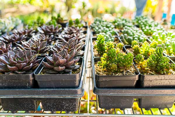 ONLINE SPECIAL EVENT INSURANCE FOR GARDENING SHOWS