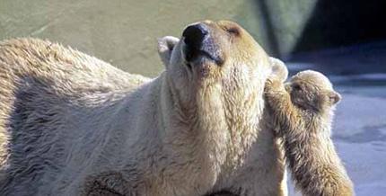 polar_bears_004-165418-edited.jpg