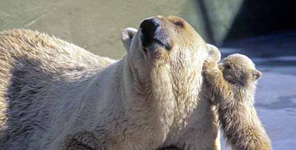 polar_bears_004-165418-edited.jpg